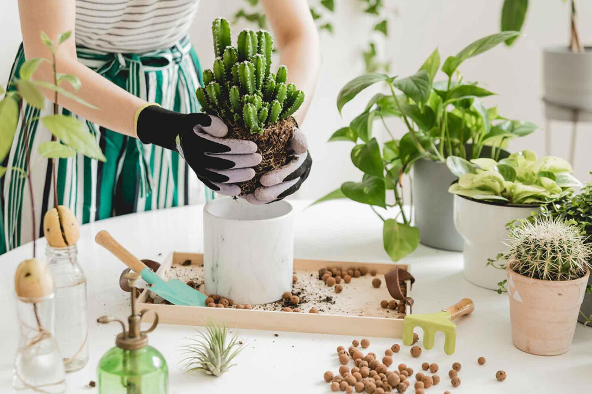 fleuriste salon de provence - fleuriste-bouquet de fleurs-compositions florales-decoration florale-creation florale-livraison de fleurs